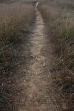 Sentier piéton dans le pré Image libre de droits