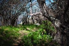 Sentier piéton dans le vieux jardin Photos stock