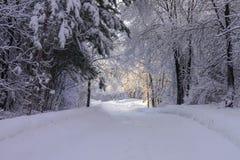 Sentier piéton dans les bois après beau Frosty Snowfall photos stock