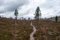 Sentier piéton dans Taiga, Finlande Photos stock
