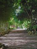 Sentier piéton dans un jardin Photographie stock libre de droits