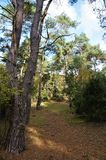Sentier piéton dans une forêt en Hollande photos libres de droits
