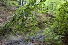 Sentier piéton de forêt Image stock