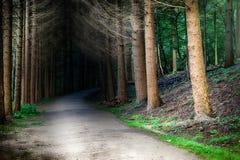 Sentier piéton de forêt au coucher du soleil Photo stock