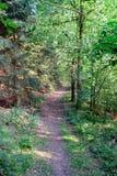 Sentier piéton de forêt en été II Image libre de droits