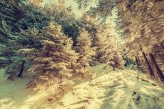 Sentier piéton de vintage dans la forêt bloquée par la neige Photographie stock libre de droits