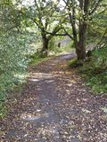 Sentier piéton en automne Image libre de droits