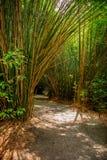 Sentier piéton en bambou Sunny Day photographie stock