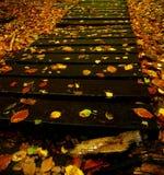 Sentier piéton en bois d'automne Photo stock