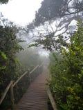 Sentier piéton en bois dans l'effilochure Jorge de bosque en piment Photo libre de droits