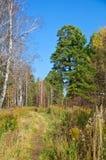 Sentier piéton en bois pendant l'automne et le ciel bleu Images libres de droits