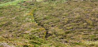 Sentier piéton en Bretagne Photographie stock libre de droits