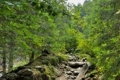 Sentier piéton en montagnes de Carpathiens Photos libres de droits
