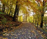 Sentier piéton en parc de ville d'automne avec les feuilles tombées jaunes Images libres de droits
