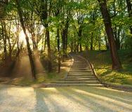 Sentier piéton en parc vert de ville, rayons allumés de coucher du soleil Images libres de droits
