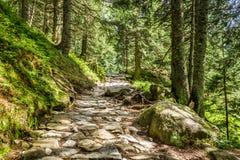 Sentier piéton en pierre entre les arbres dans les montagnes Photos libres de droits