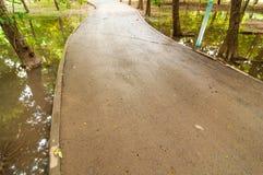 Sentier piéton et nature d'arbre Photo libre de droits