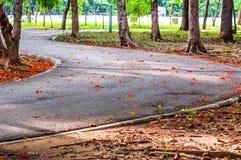 Sentier piéton et nature d'arbre dans le jardin Photo libre de droits
