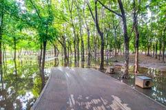Sentier piéton et nature d'arbre dans le jardin Images stock