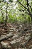 Sentier piéton le long de la traînée à côté du temple de Beomeosa à Busan photo libre de droits