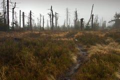 Sentier piéton menant à la forêt brumeuse morte Photographie stock libre de droits