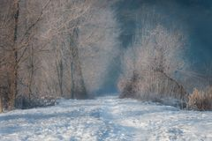Sentier piéton menant parmi les arbres givrés un matin ensoleillé Photographie stock