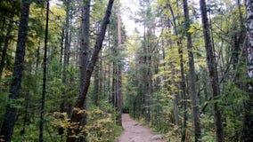 Sentier piéton par la forêt Photos libres de droits