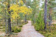 Sentier piéton par la forêt colorée d'automne Photographie stock libre de droits