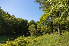 Sentier piéton par la forêt naturelle des arbres images libres de droits