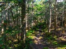Sentier piéton par les bois denses, lumière du soleil tachetée images stock