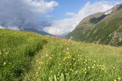 Sentier piéton par les prés alpins de montagne Photographie stock libre de droits