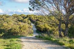 Sentier piéton par Manning Park Bushland Images stock