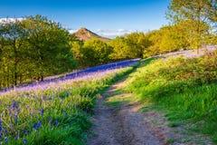 Sentier piéton par Newton Wood Images stock