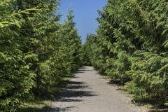Sentier piéton parmi les arbres Photos libres de droits