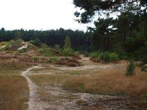 Sentier piéton sur la bruyère Photo stock