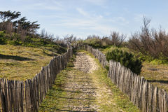 Sentier piéton sur la dune atlantique en Bretagne Image libre de droits