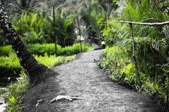 Sentier piéton sur Ramang Ramang Images libres de droits