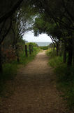 Sentier piéton vers l'océan Image libre de droits