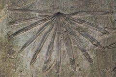 Sentier piéton de ciment avec le soulagement en feuille de palmier Photo stock