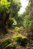 Sentier piéton en montagnes de ruwenzori Photo stock