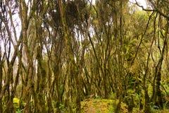 Sentier piéton en montagnes de ruwenzori Photographie stock libre de droits