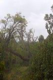 Sentier piéton en montagnes de ruwenzori Photo libre de droits