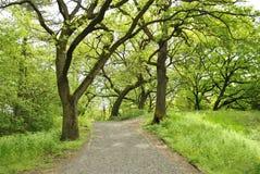 Sentieri nel bosco Fotografie Stock