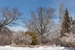 Sentieri per pedoni nel parco della citt? di Mosca Alberi in neve Giorno di inverno soleggiato I cittadini dei vacanzieri cammina fotografia stock libera da diritti