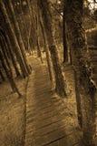Sentiero costiero Fotografie Stock Libere da Diritti
