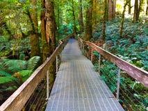 Sentiero costiero alla galleria della foresta pluviale Fotografie Stock Libere da Diritti