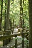 Sentiero costiero attraverso il boschetto Fotografie Stock Libere da Diritti