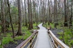 Sentiero costiero attraverso il legno immagini stock libere da diritti