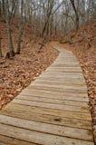 Sentiero costiero attraverso la foresta Fotografia Stock