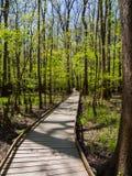 Sentiero costiero attraverso le foreste di legno duro, parco nazionale di Congaree fotografia stock libera da diritti